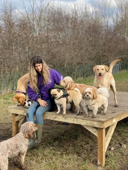 Friendly dog Meet Monday & Thursday